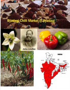 ನಾಲಿಗೆಯ ಉರಿಯನ್ನೂ ಹಿತವೆನಿಸಿ ನಂಬಿಸಿರುವ ಮೆಣಸಿನಕಾಯಿ: Capsicum annuum
