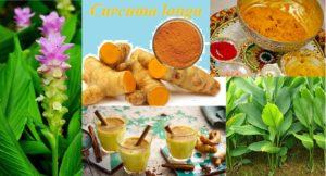ಆಹಾರ, ಆರೋಗ್ಯ ಮತ್ತು ಸಂಸ್ಕೃತಿಗೆ ಬಣ್ಣದ ಮೆರುಗು ಕೊಟ್ಟ ಅರಿಸಿನ Curcuma longa