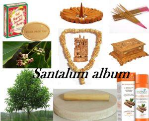 ಕನ್ನಡದ್ದೇ ನೆಲದ ಶ್ರೀಗಂಧ Santalum album