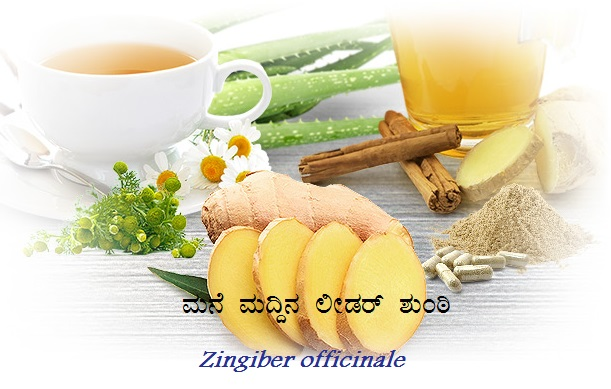 Read more about the article ಮನೆ ಮದ್ದಿನ ಲೀಡರ್ ಶುಂಠಿ :  Zingiber officinale