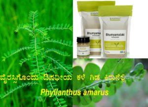 Read more about the article ವೈರಸ್ಸಿಗೊಂದು ಔಷಧೀಯ ಕಳೆ ಗಿಡ ಕಿರುನೆಲ್ಲಿ: Phyllanthus amarus