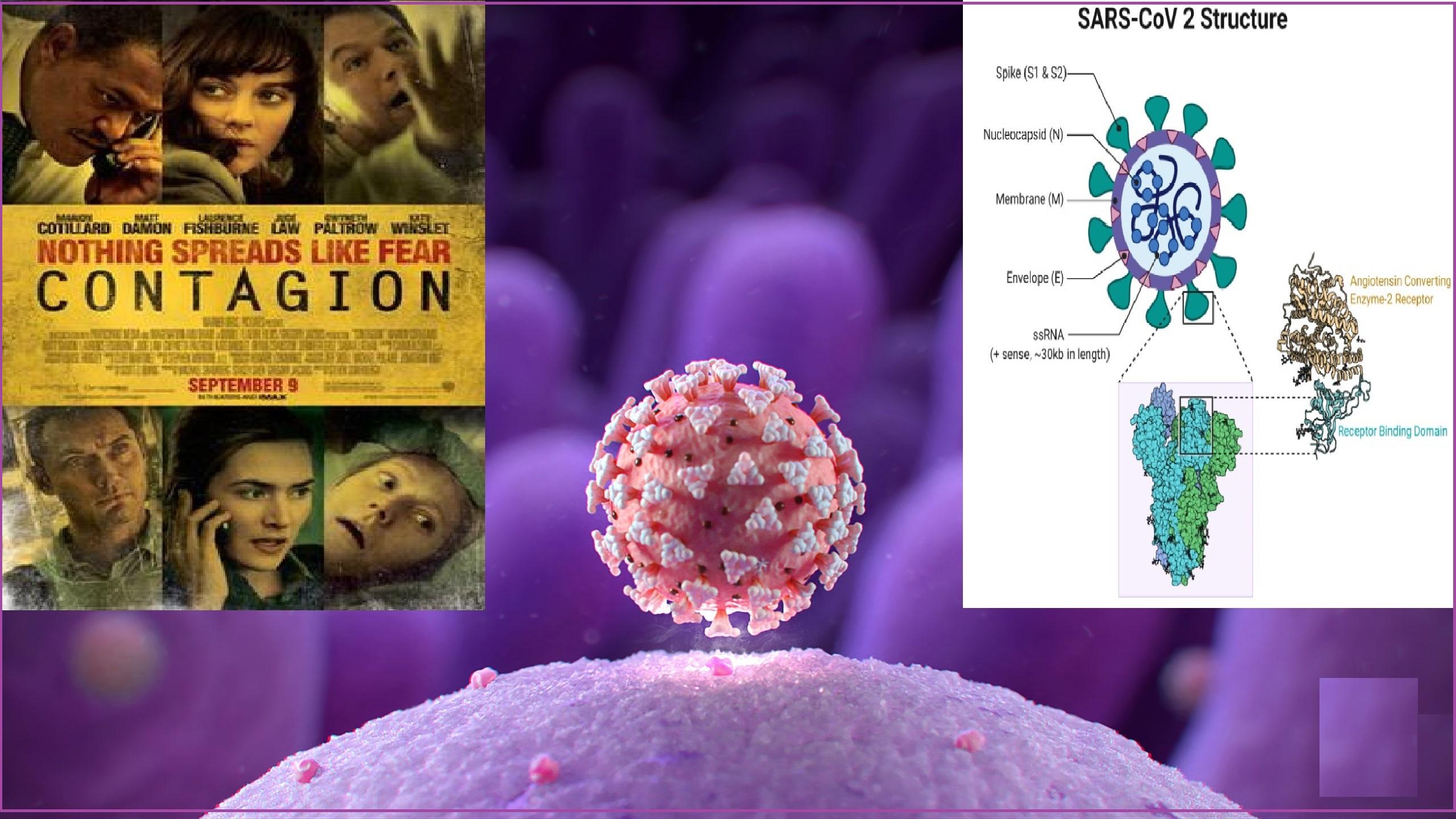 Read more about the article SARS COV 2 (ಸಾರ್ಸ್ ಕೋವ್ 2) ವೈರಸ್ ಗಳ ಬದುಕಿನ ಬಂಡಿ: ಇತಿಹಾಸದೊಂದಿಗೆ ಬೆರೆತ ಕಥೆ
