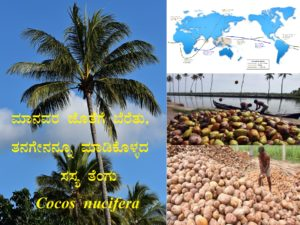 Read more about the article ಮಾನವರ ಜೊತೆಗೆ ಬೆರೆತು, ತನಗೇನನ್ನೂ ಮಾಡಿಕೊಳ್ಳದ ಸಸ್ಯ ತೆಂಗು : Cocos nucifera