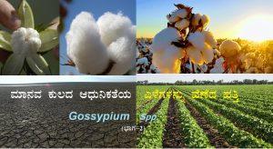 ಮಾನವ ಕುಲದ ಆಧುನಿಕತೆಯ ಎಳೆಗಳನ್ನು ಹೆಣೆದ ಹತ್ತಿ: Gossypium Spp.                      (ಭಾಗ-2)